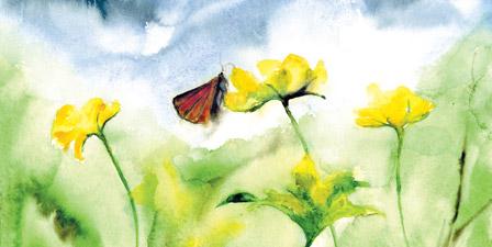 Blue sky butterfly