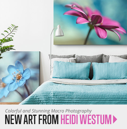 Shop macro photography wall art from Heidi Westum