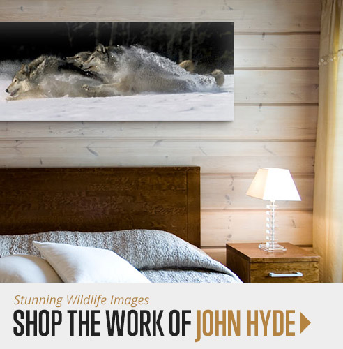 Shop John Hyde Wall Art