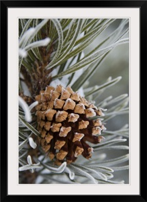 Close-Up image of frost-covered pine cone on branch in winter