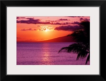 Hawaii, Maui, Tropical Sunset With Palm Tree