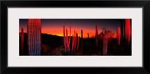 Organ Pipe National Park AZ
