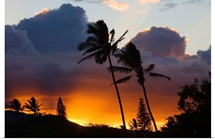 Hawaii, Maui, North Shore, Palm Trees On A Hill, Puffy Clouds And Colorful Sunset