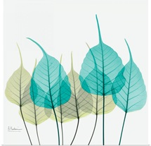 Blue and Green Bodhi Tree Leaf X-Ray Photograph