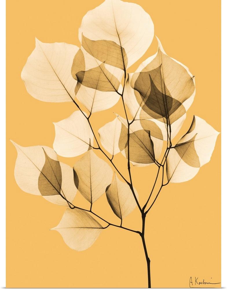 Poster Print Wall Art entitled Sepia Dalbersia Leaf X-Ray Photograph ...