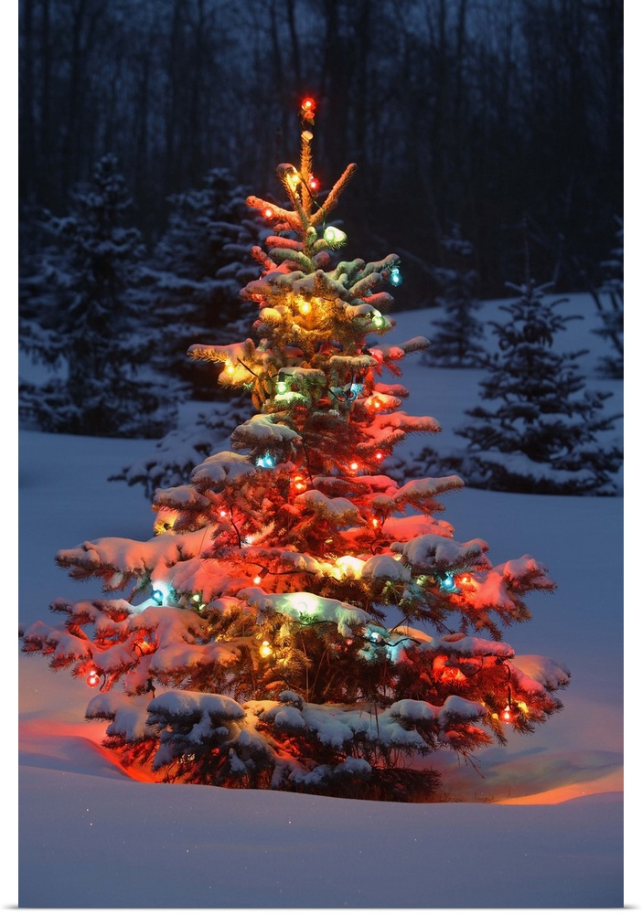 Poster Print Wall Art entitled Christmas Tree With Lights Outdoors In The Forest | eBay