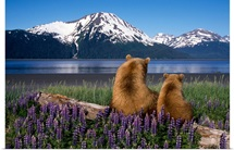 Grizzly sow and cub sit on log and view Turnagain Arm, Southcentral Alaska