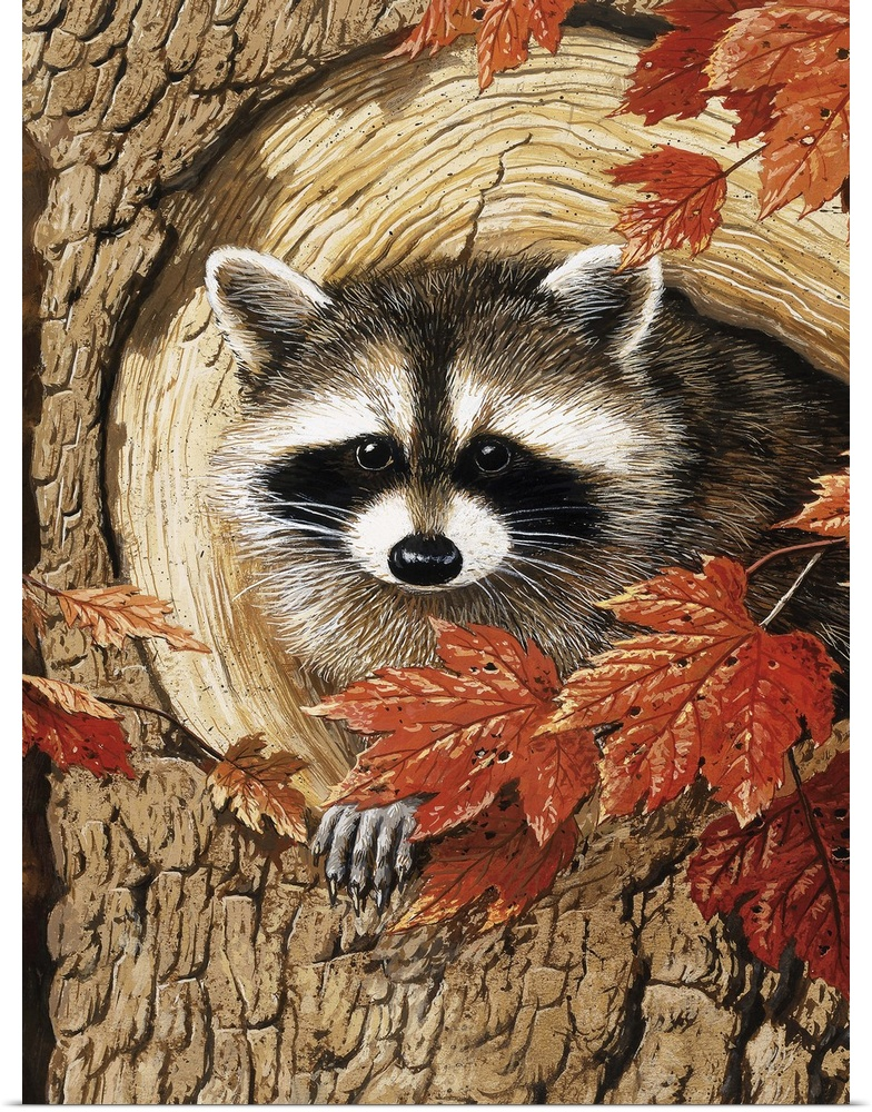 Poster Print Wall Art entitled Raccoon