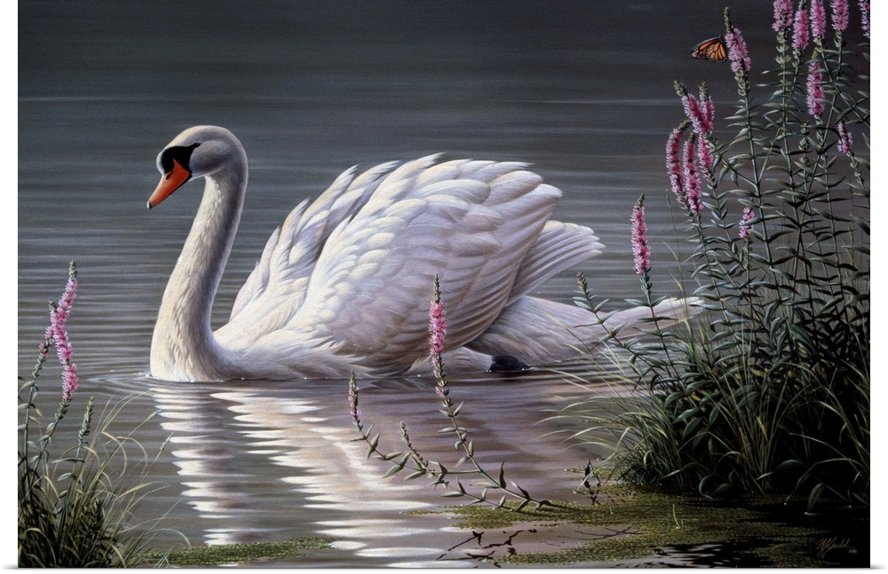 the mute swan essay A mute swan is more silent than the trumpeter swan, but be careful trying to see it  up close it will make hissing sounds and flap its wings when it feels it or it's.