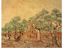 The Olive Grove, 1889 (oil on canvas)