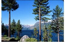 Fallen Leaf Lake Area with pine trees in foreground, Lake Tahoe, California, USA