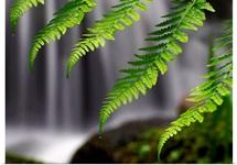 Cascading Ferns