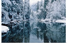 Snow-covered trees reflected on the Merced River, Yosemite National Park, California