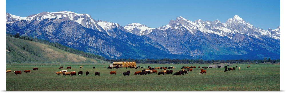 Jackson Hole Wallpaper - WallpaperSafari