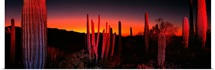Organ Pipe National Park AZ