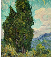 Cypresses