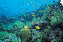 Tropical fish swimming over reef