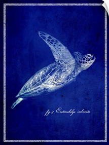 Marine Collection II - Sea Turtle
