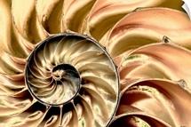 Skeleton Swirl