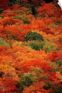 Autumn foliage, Cape Breton Highlands National Park, Nova Scotia, Canada