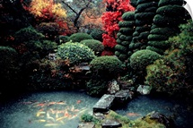 View of a private garden and koi pond