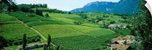 High angle view of fields, Bolzano, Italy