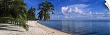 Palm trees on the beach, Matira Beach, Bora Bora, French Polynesia