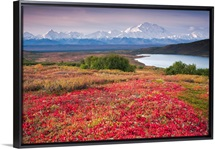 Early morning view of Mt. McKinley and Wonder Lake during Autumn