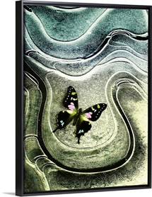 Pink and Green Moth