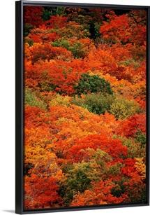 Autumn foliage, Cape Breton Highlands National Park, Nova Scotia, Canada
