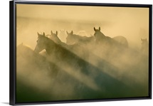 Horses run in the Ukraine