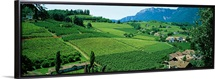 High angle view of fields, Bolzano, Italy