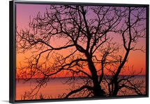 View of ocean through silhouetted tree branches, dawn, Maryland