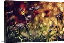 Bokeh Wildflowers