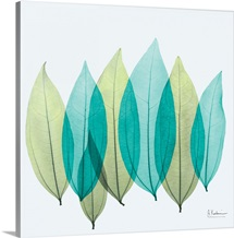 Blue and Green Coculus Leaf X-Ray Photograph