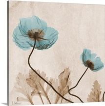 Blue Poppy X-Ray Photograph