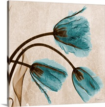 Blue Tulip X-Ray Photograph