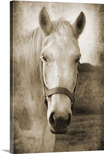 Horse Kiss IV