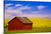 A Red Farm Building Against A Canola Field