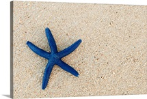 Blue Starfish On A Sandy Beach