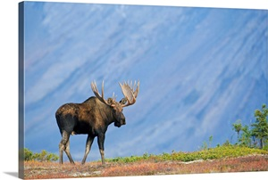 moose pass chat sites Live chat wish list view | sign in  be cautious with children around the cliffs and give moose a wide  a park pass is required for hiking or use of other.