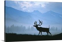 Caribou Walking Denali Natl Park Fog Alaska Composite