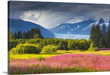 Coast mountains and Mendenhall glacier with Fireweed, Brotherhood Park, Juneau