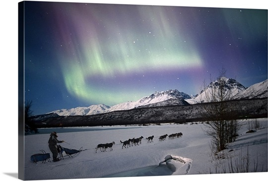 Dog team on the Matanuska River with Northern Lights, Matanuska Susitna, Alaska