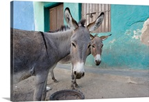 Donkeys, Harar, Ethiopia, Africa