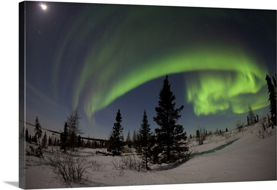 Green Northern Lights against night sky in Wapusk National Park, Manitoba, Canada