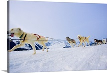Guided dog mushing tour in Moose Meadows at Alyeska Resort near Girdwood