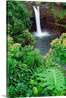 Hawaii, Big Island, Rainbow Falls, Pool Surrounded By Tropical Foliage
