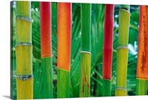 Hawaii, Maui, Detail Of Red Wax Palm Stalks Lined Up