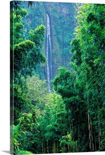 Hawaii, Maui, Hana, Oheo Gorge, Waimoku Falls, And Bamboo Forest